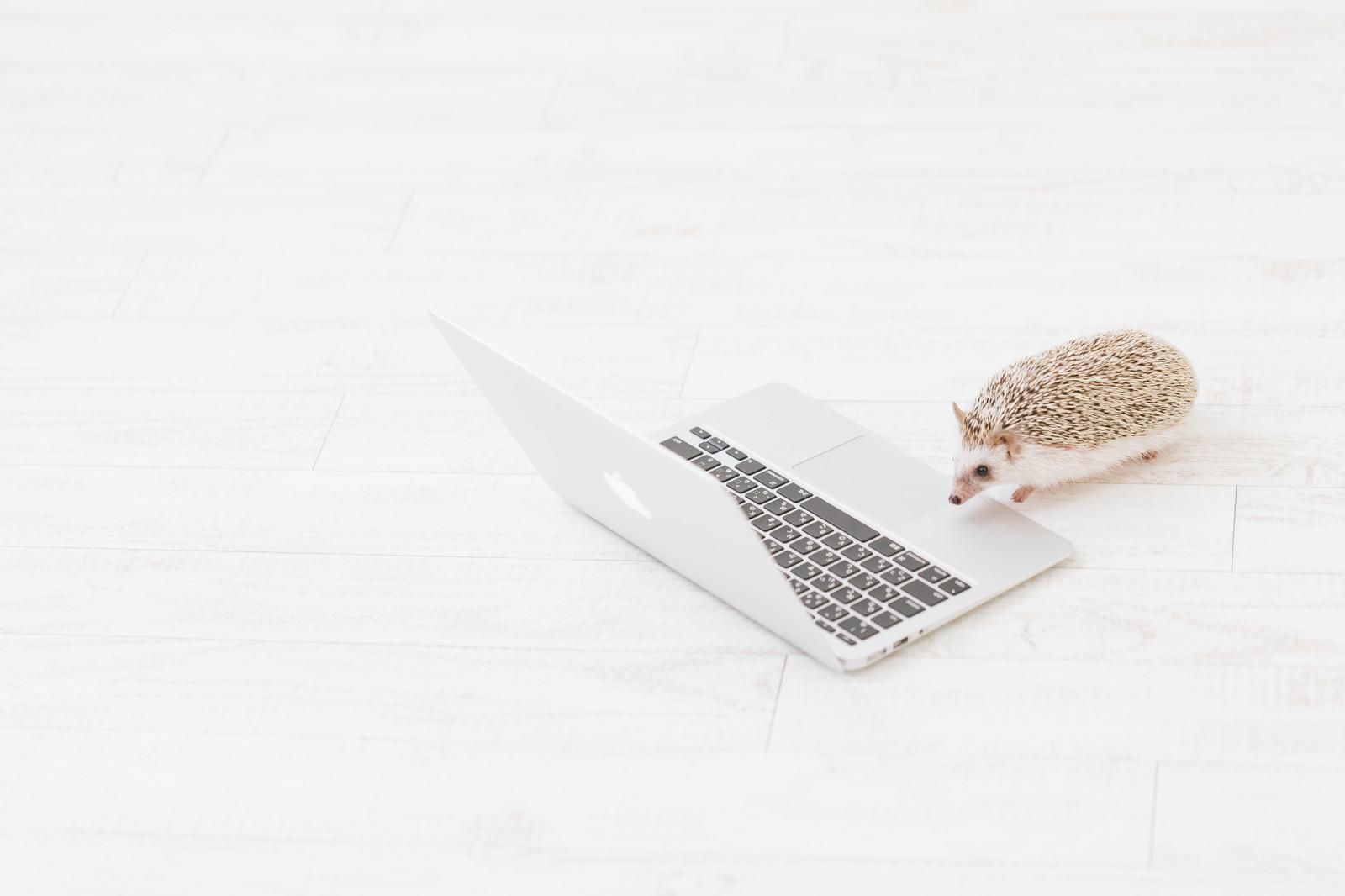 プログラミングをするハリネズミ